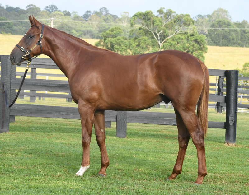 Inglis Classic Yearling Sales Thoroughbred Horse Auctions