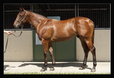 Fastnet Rock-Rose of Cimmaron colt