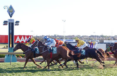 Magic Marvo wins at Canterbury
